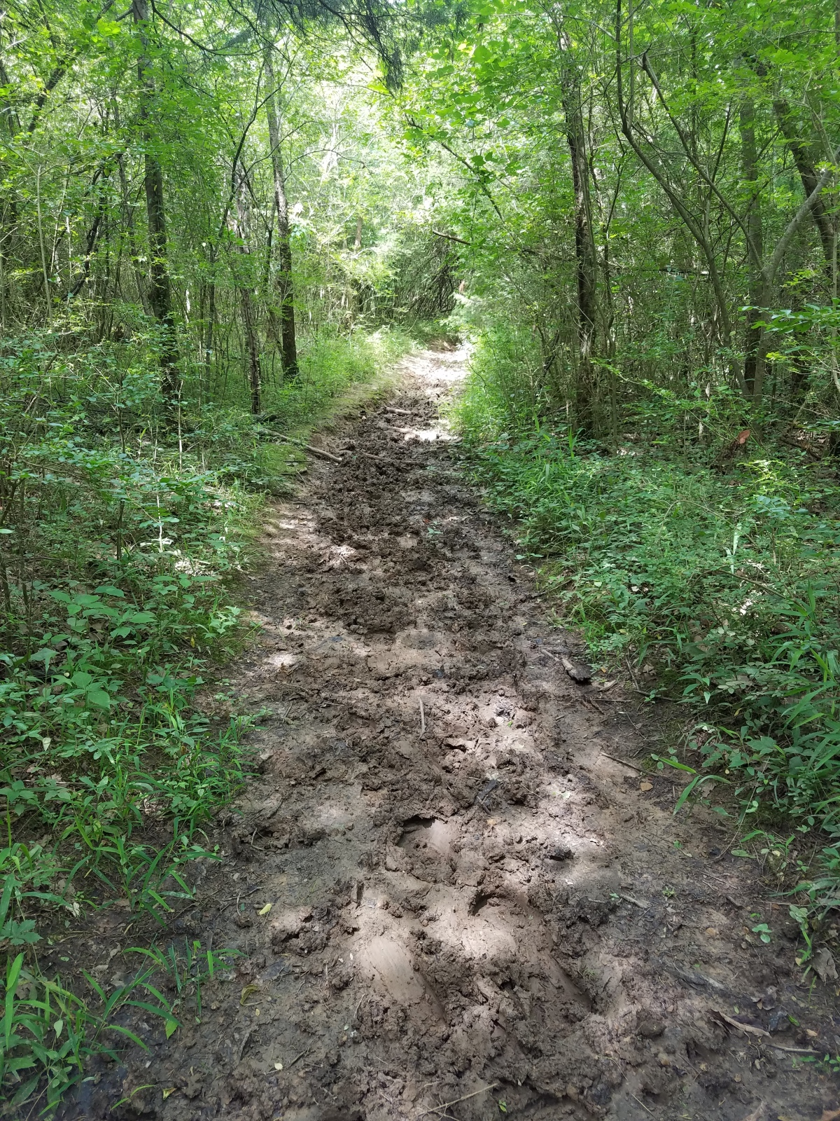Trail Review: Twin Forks Trail (#48)