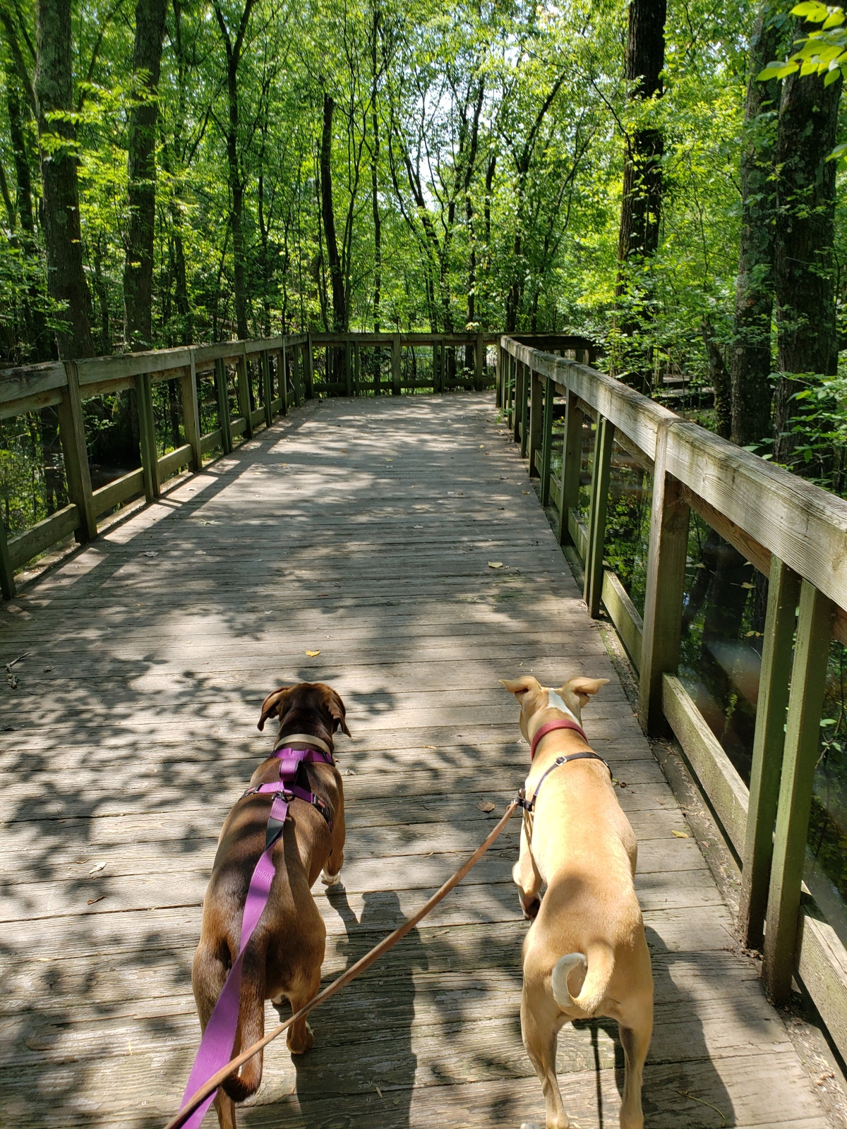 Trail Review: Shelby Bottoms Nature Park: West Loop (#12)