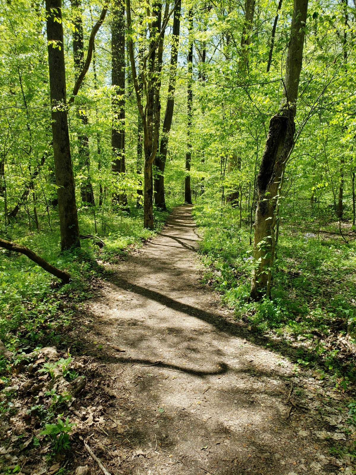 Trail Review : WoodlandTrail